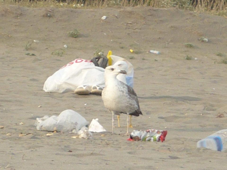 Möve im Müll